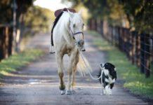 Pferd geht Gassi