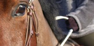 Pferd und Reiter mit Zügeln