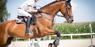 Berufe mit Pferden
