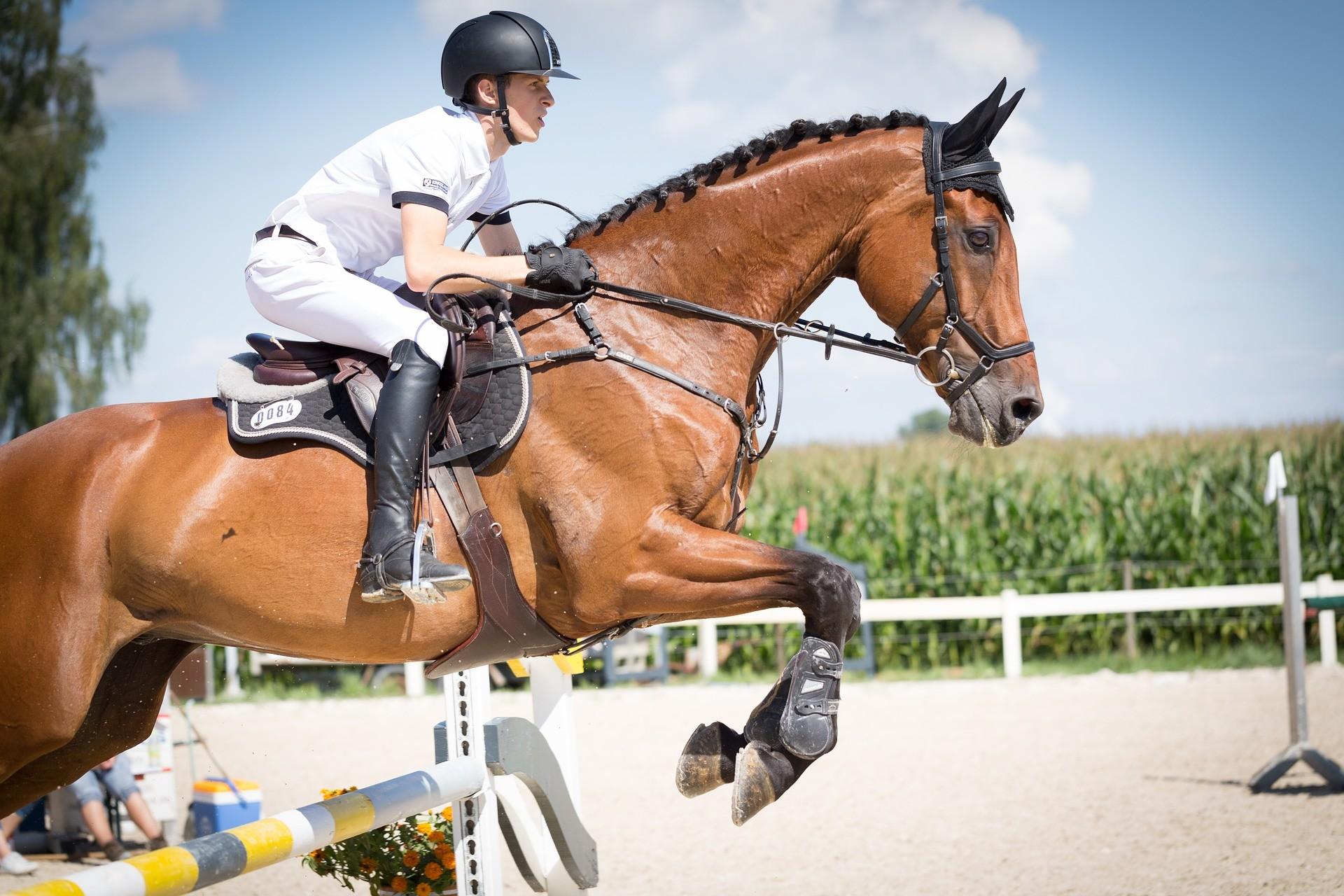 Pferden mit Teambuilding Österreich