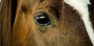 Pferd in Nahaufnahme