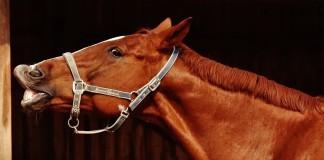 Die verschiedenen Pferdetypen