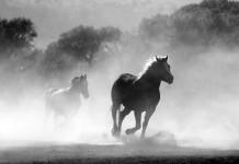 Die Pferdegangarten
