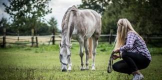 Eine Pferdefreundin beobachtet ihr weidendes Pferd