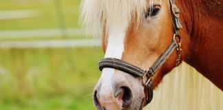 Erste Hilfe beim Pferd