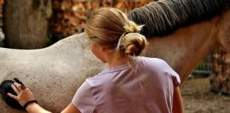 Frau striegelt Pferd