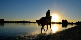 Schutzausrüstung für Reiter